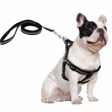 Reflective Dog Harness Leash Set For Small Dogs