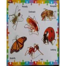 Insect Knob Puzzle 6 Pcs