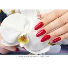 Professional White Nails Tips