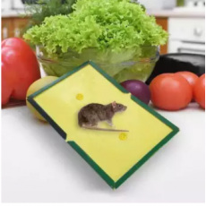 Just Original Pack of 1 piece Reusable Expert Catch Rat and Mouse Glue Trap...