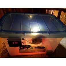 EGG INCUBATOR Semi Automatic 25-35 Eggs