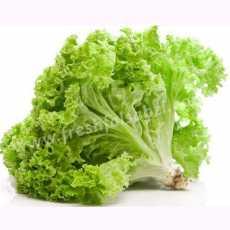 50 Pcs Seeds - Lettuce seeds (Salad Pata) - (Vegetable seeds) BY VIP Deals