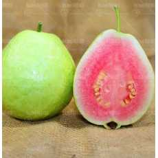10 Pcs. Red Sweet Guava Seeds ( Psidium Guajava ) Fresh Imported