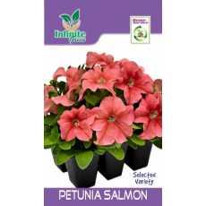 Petunia Salmon winter Flower seed