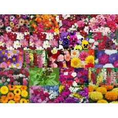 20 Pack Winter Flower seeds for Garden