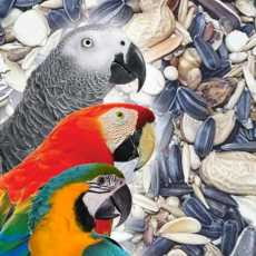 02 Kilo Gram Seed Mix / Feed For African Grey Parrot, Cockatoo Macaws, Parrot...