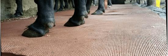 Comfort Mats for Cattles Waterproof Antislip